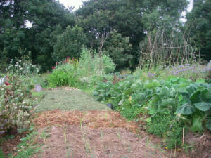 A bed mulched with grass scythed from the garden paths, surrounded by the garden in full growth