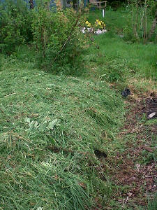 A garden bed mulched with scythe mowings, adding fertility, supressing weeds and protecting the soil