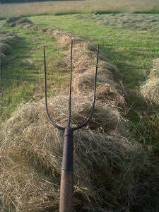 Unusual 3-pronged pitchfork we found on a recent trip to Cornwall.