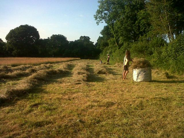 Bringing in the hay. Today's mowing is being rowed up in the background.