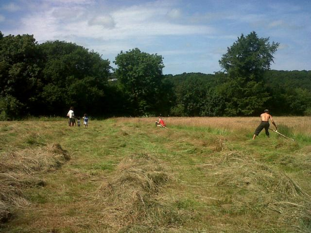 Mowing in Cae Mari Jones during the Social Mow