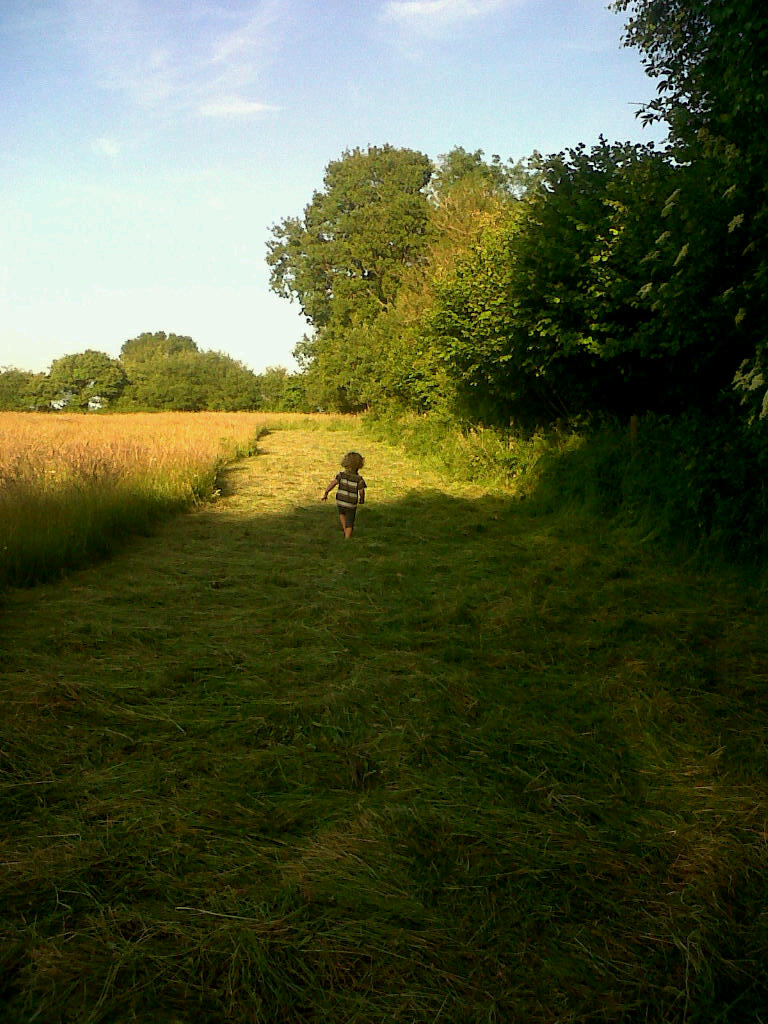 Grass mown this morning, spread out to dry