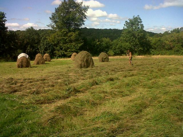 Right- windrows mown in the morning, Centre- Phil spreading hay mown the day before, Left-Hay racks