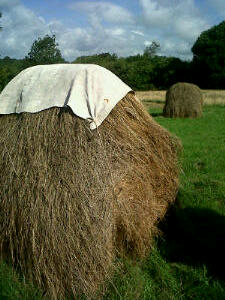 Rack with hat - Layer of grey weathered hay on the outside with yellow-green hay showing on the ends