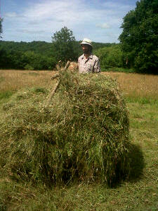 Building up hay from the first to second rail. Note the outside edge is kept nearly vertical.