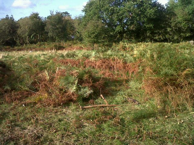 Bracken Mowing - cut bracken to the left, uncut to the right
